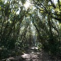 Portions of the trail lead through dense forest.- Monte Circeo