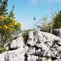The summit of Monte Circeo.- Monte Circeo