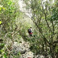 The trail becomes steeper as it leaves the lower forest.- Monte Circeo