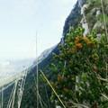 Monte Circeo, Central Italy.- Monte Circeo