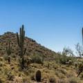 Cat Peaks.- Cat Peaks Trail