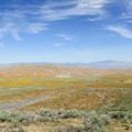 Hike the ridgelines to view distant peaks and valleys to the north.- Antelope Valley Poppy Reserve
