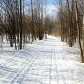 The trails are in a nice open forest.- Cap-St-Jacques Nature Park