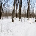 There is a small sugar shack in the park, which can make for a nice break.- Cap-St-Jacques Nature Park
