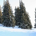 Snow and evergreens below treeline on Mount Russell.- Berthoud Pass Ski Area
