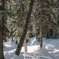 The ski trail to the highway.- Berthoud Pass Ski Area