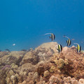 The reef is teeming with life beyond the shallows.- Kahe Beach Park / Electric Beach