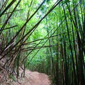 The first trails have relatively little altitude gain and meander through bamboo and cloud forests.- Konahuanui Summit / K2 via Pu'u Ohia