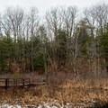 The winter boardwalk through the wetlands.- Lake Shaftsbury State Park