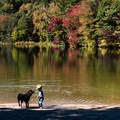 Dogs are only allowed during the off season.- Lake Shaftsbury State Park
