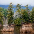 View of the wetlands from the trail.- Lake Shaftsbury State Park