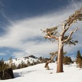 Lots of beautiful old-growth trees to check out near the summit of Donner Peak.- The Lake Run: Judah Ridge to Donner Lake