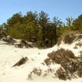 Green Trail dunes.- Crane Beach + Crane Wildlife Refuge