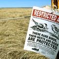 Piping plover nesting area.- Crane Beach + Crane Wildlife Refuge