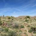Yucca and cactus dominate the landscape.- Barber Peak Loop