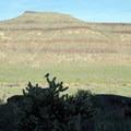 A bird perches on a cholla cactus near Barber Peak.- Barber Peak Loop