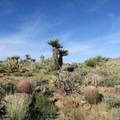How many species of cactus can you identify along this loop?- Barber Peak Loop