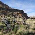 An unusual vista of dead trees on the eastern side of Barber Peak.- Barber Peak Loop