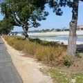 Near Yorba Linda.- Santa Ana River Trail to Huntington Beach