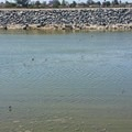Gulls, terns, and sandpipers on the Santa Ana River Trail.- Santa Ana River Trail to Huntington Beach