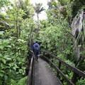 Thick jungle near the Kohaihai River.- New Zealand Great Walks: Heaphy Track