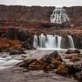 This waterfall drops over 100 meters.- Dynjandi (Fjallfoss)