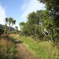 The forest of the Heaphy Track north of Heaphy Hut.- New Zealand Great Walks: Heaphy Track
