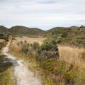 The Mackay Downs on the way to Saxon Hut.- New Zealand Great Walks: Heaphy Track