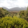 Overlooking the Gouland Downs just after Saxon Hut.- New Zealand Great Walks: Heaphy Track