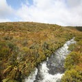 Clean, cold water flows through the Gouland Downs.- New Zealand Great Walks: Heaphy Track