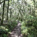 The Enchanted Forest.- New Zealand Great Walks: Heaphy Track