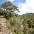 The Heaphy Track on the ascent to Perry Saddle, about 0.8 kilometers from Gouland Downs Hut.- New Zealand Great Walks: Heaphy Track