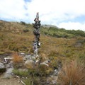 Boot Pole Corner, on the way to Perry Saddle.- New Zealand Great Walks: Heaphy Track