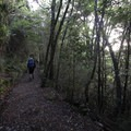 Hikers descending to Brown Hut.- New Zealand Great Walks: Heaphy Track