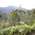 Ferns and tree ferns are very prevalent from Perry Saddle to Brown Hut.- New Zealand Great Walks: Heaphy Track