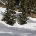 Cutoff for Quandry Peak.- McCullough Gulch