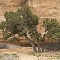 The high sandstone cliffs of the northern San Rafael Swell.- Head of Sinbad