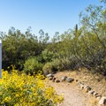There are many trails in the park, including a short nature trail in the campground.- Usery Mountain Regional Park