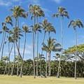 Palm trees at Kahala Beach.- Kahala Beach