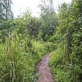 The early part of the trail.- Pu'u Ma'eli'eli Trail