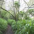 The Pu'u Ma'eli'eli Trail.- Pu'u Ma'eli'eli Trail