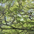 There are always such beautiful and large trees in Hawai'i.- Pu'u Ma'eli'eli Trail