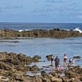 The tide pools near Sharks Cove at Pupukea Beach Park. These pools are a safe place for the family on most days, though conditions can get big in winter.- Sharks Cove