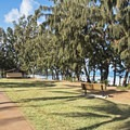 The grassy area at Sharks Cove.- Sharks Cove