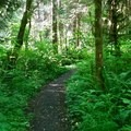 Much of the trail is lush and green.- Oregon Coast Trail: Arch Cape to Short Sand Beach
