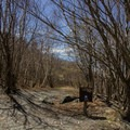The trailhead at Berlin Mountain.- Berlin Mountain + Taconic Crest Trail