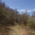 An easy grade to begin the hike to Berlin Mountain.- Berlin Mountain + Taconic Crest Trail