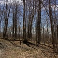 A second fork on the trail to Berlin Mountain. Continue left.- Berlin Mountain + Taconic Crest Trail