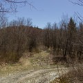 The correct trail, which continues to the left, is sometimes difficult to follow.- Berlin Mountain + Taconic Crest Trail