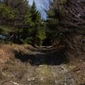 Nearing the summit of Berlin Mountain.- Berlin Mountain + Taconic Crest Trail